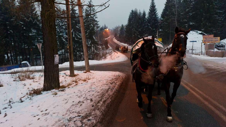 Przejażdżki konne w Zakopanem atrakcją dla dorosłych i dzieci